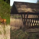 Jagtejendom med kronvildt Djursland